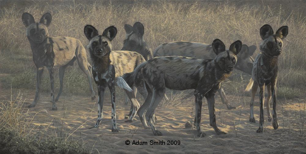 """All Ears"" - Acrylic - 10"" x 20"" - Sold All Ears African artist Adam Smith Adam Smith Artist"