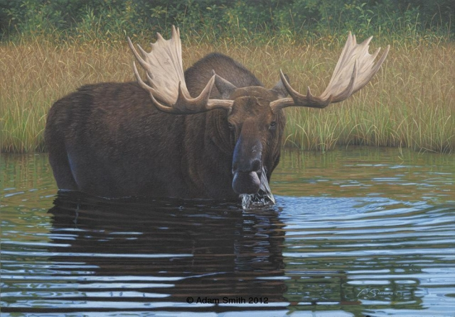 """Backwater Bull"" - Acrylic - 12"" x 17"" - Sold Backwater Bull African artist Adam Smith Adam Smith Artist"