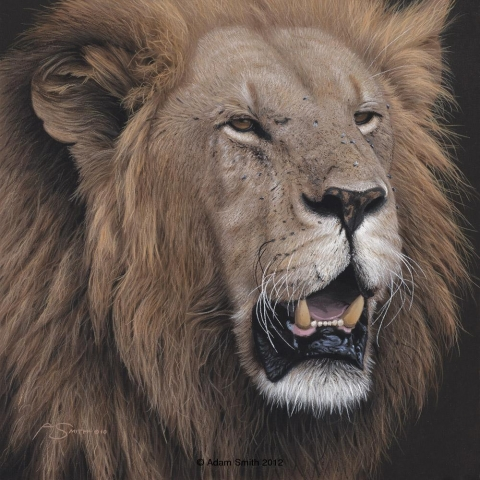 """King of the Savannah"" - Acrylic - 10"" x 10"" - Sold King of the Savannah African artist Adam Smith Adam Smith Artist"