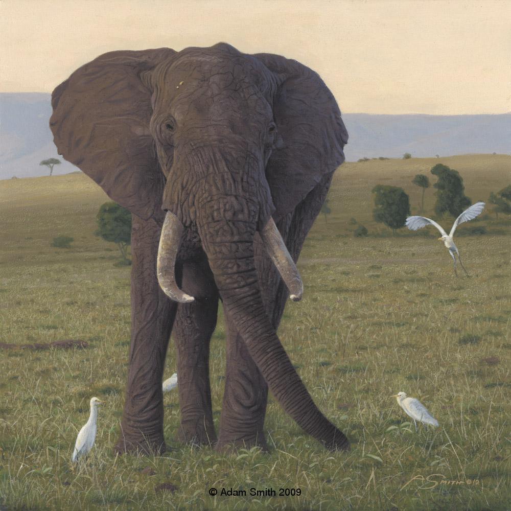 """Tembo"" - Acrylic - 10"" x 10"" - Sold Tembo African artist Adam Smith Adam Smith Artist"