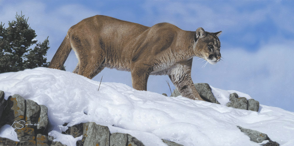 On the Prowl - Cougar - 8 x 16 Acrylic Painting by Adam Smith