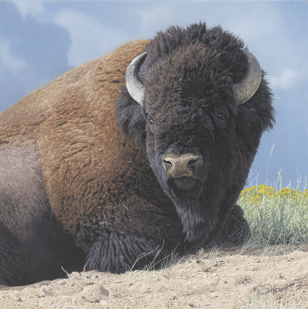 """Western Icon"" - American Bison 18"" x 18"" Original Acrylic by Adam Smith"
