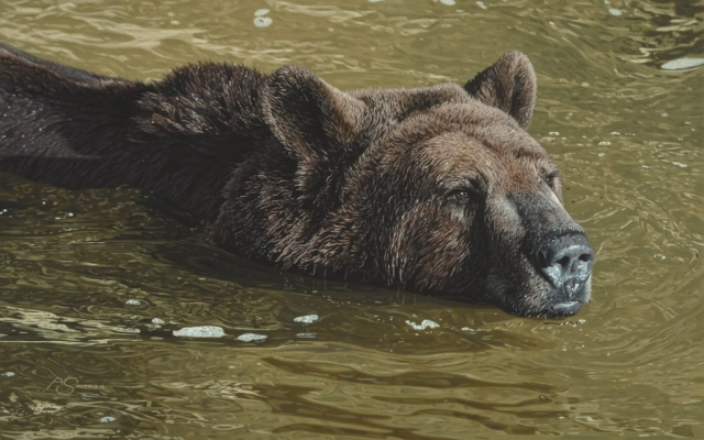 """Summer Soak"" -Grizzly Bear 15"" x 24"" Original Acrylic by Adam Smith"