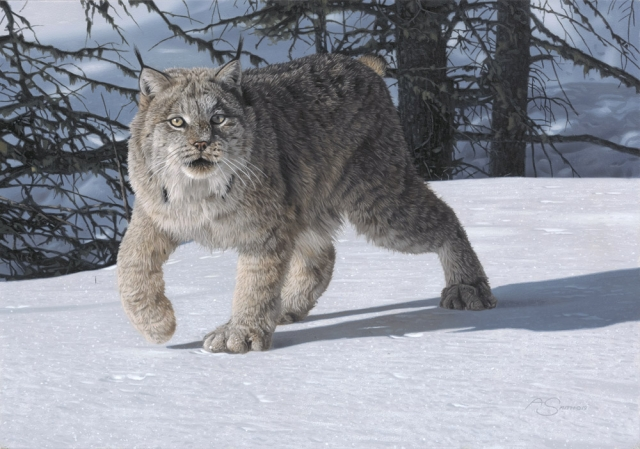 """Walking Softly"" Lynx by Adam Smith Original Acrylic 14"" x 20"" Available at Western Visions"