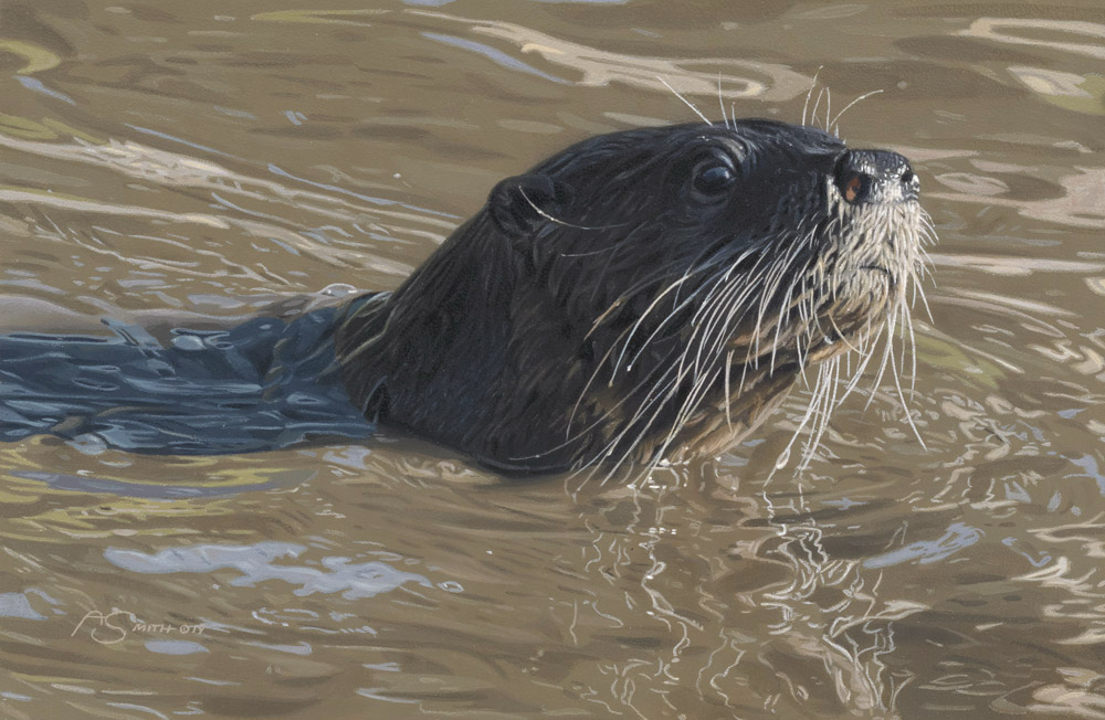 """River Cruising"" Otter by Adam Smith Original Acrylic 8"" x 12"" Available at Trailside Galleries"