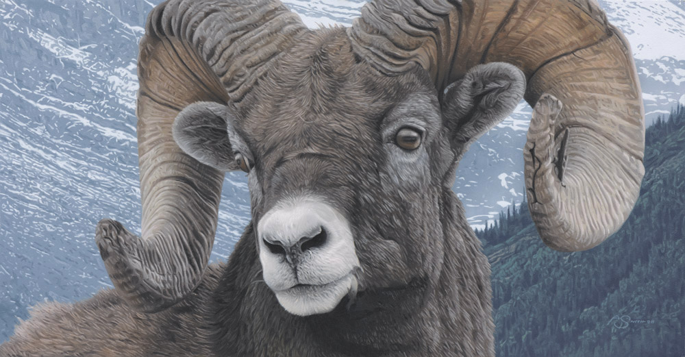 """Ram Country"" Bighorn Ram Original 12"" x 23"" - Acrylic by Adam Smith Available at Quest for the West"