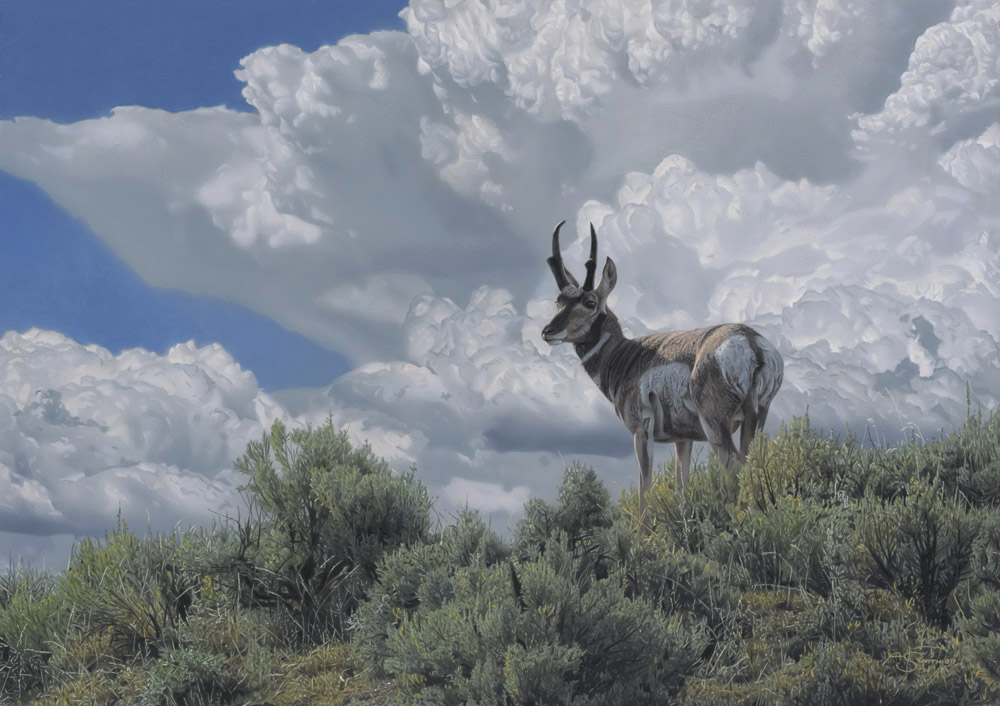 """Under the Big Sky"" - Pronghorn - 19"" x 27"" Acrylic"