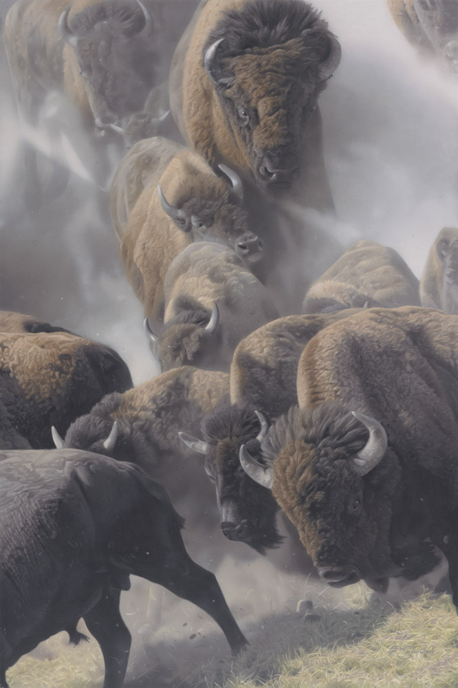 """Valley Thunder"" Bison by Adam Smith Original Acrylic 30"" x 20"""