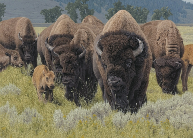 """Generations"" - Bison by Adam Smith 25"" x 35"" - Acrylic"