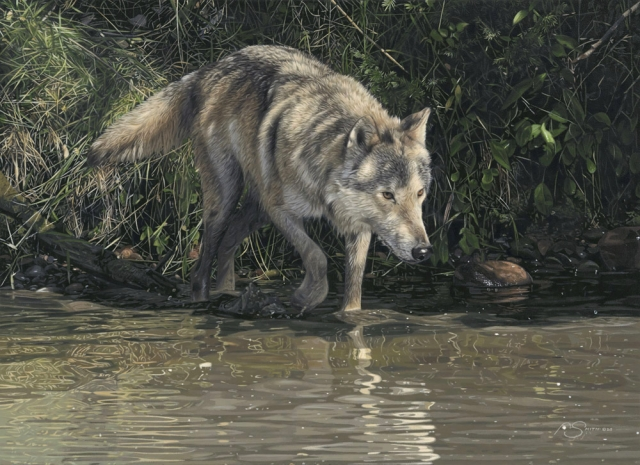 """River's Edge"" Grey Wolf by Adam Smith 16"" x 22"" Acrylic Available through: <a href=""https://www.briscoemuseum.org/adam-smith/"" target=""_blank""> Night of Artists/Briscoe Museum</a>"