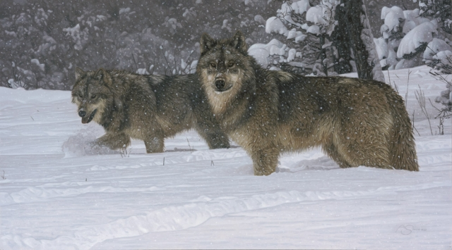 """Winter Grays"" Wolves by Adam Smith 15"" x 27"" Original Acrylic (ND_2213)"