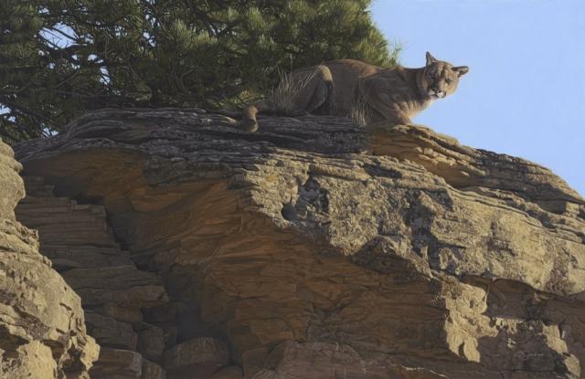 """The Surveyor"" Mountain Lion by Adam Smith 24"" x 37"" Original Acrylic (ND_2374)"