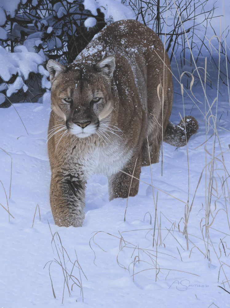 """Winter Patrol"" - Mountain Lion Original Acrylic 12"" x 9"" by Adam Smith"