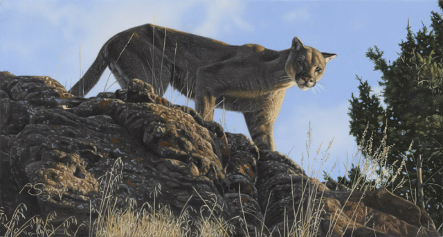 """""""On the Lookout"""" by Adam Smith Mountain Lion - 8"""" x 15"""" Original Acrylic"""