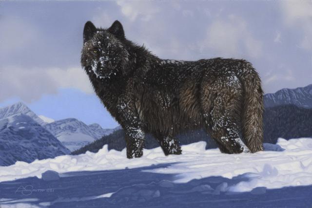 """Winter Coat"" - Wolf by Adam Smith 8"" x ""12 Original Acrylic"